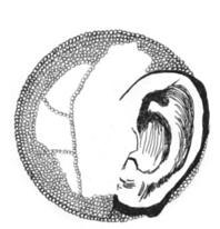Skizze akustisches Plankton